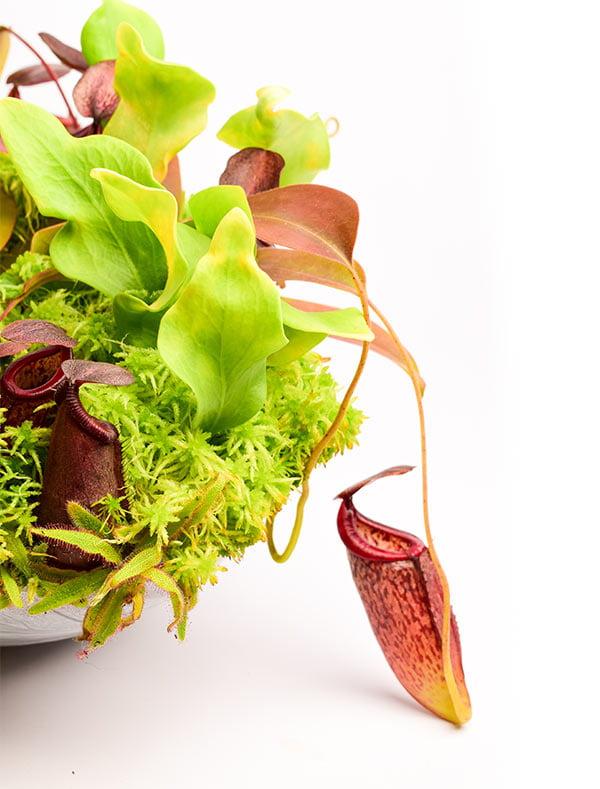 Florae Collaborative